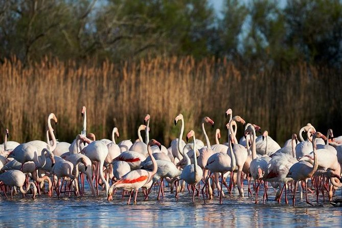 Camargue and Aigues Mortes safari tour from Sète photo 1