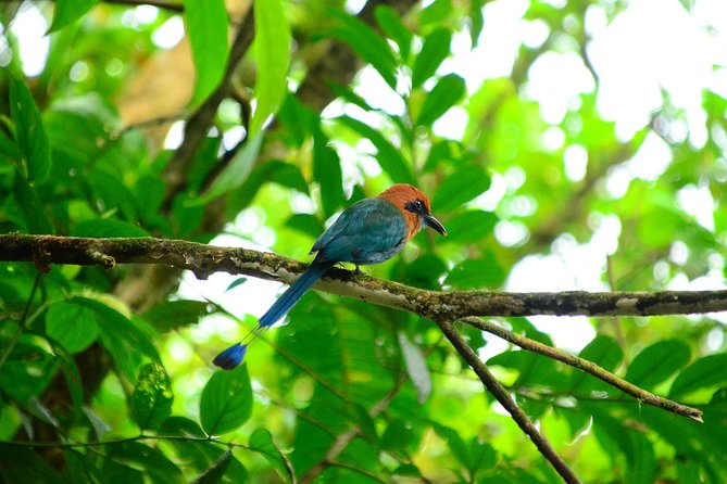 The Best Birdwatching tour inside the Arenal Volcano photo 16