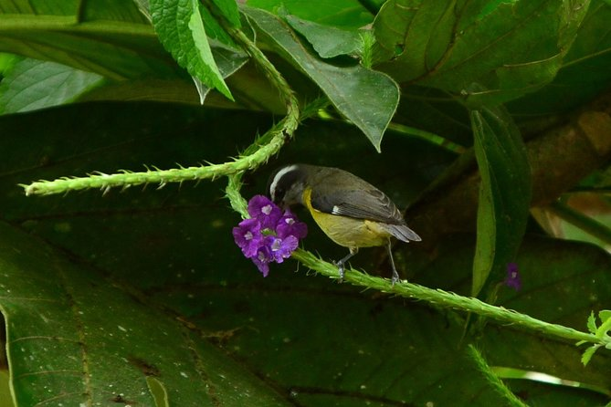 The Best Birdwatching tour inside the Arenal Volcano photo 6