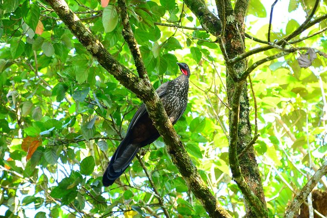 The Best Birdwatching tour inside the Arenal Volcano photo 10