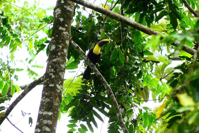 The Best Birdwatching tour inside the Arenal Volcano photo 9