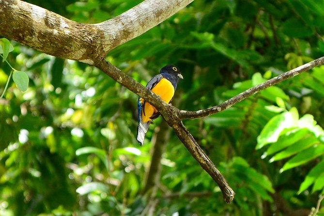 The Best Birdwatching tour inside the Arenal Volcano photo 18