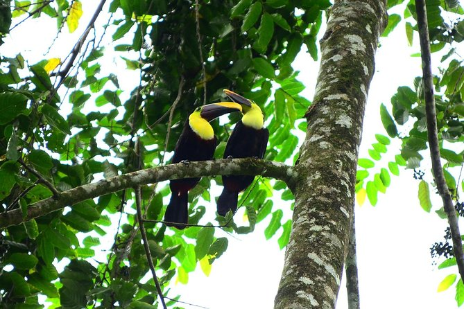 The Best Birdwatching tour inside the Arenal Volcano photo 7