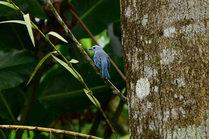 The Best Birdwatching tour inside the Arenal Volcano photo 4