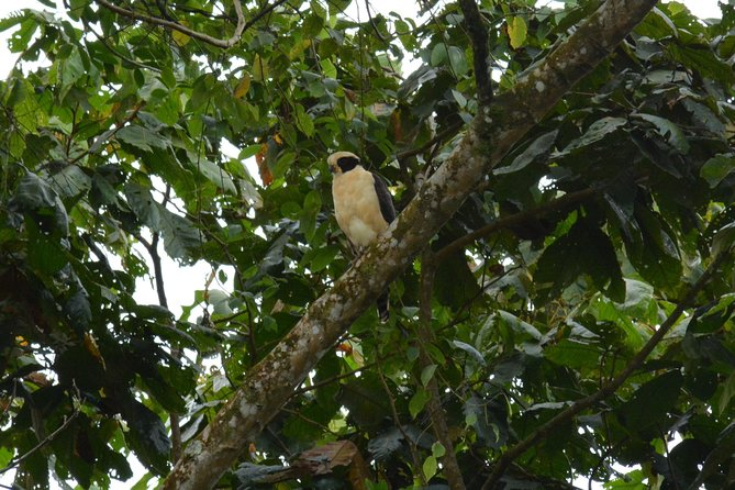 The Best Birdwatching tour inside the Arenal Volcano photo 14
