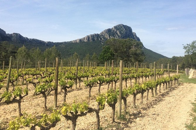 Pic St Loup winetour from Sète photo 1