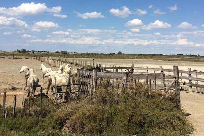 Camargue and Aigues Mortes safari tour from Sète photo 4
