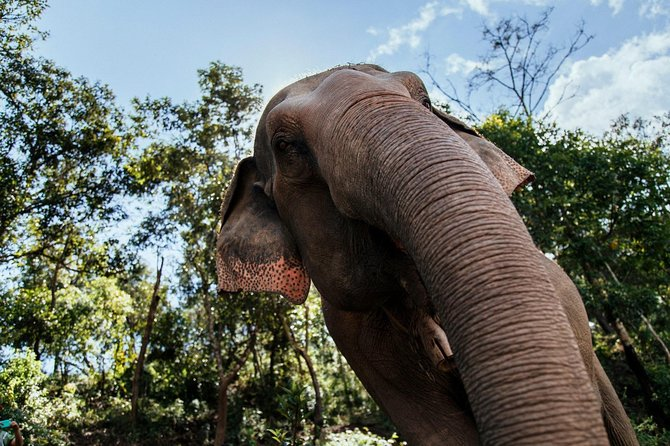 Private Tour Chiang Mai's Elephants & Sticky Waterfall Day Trip