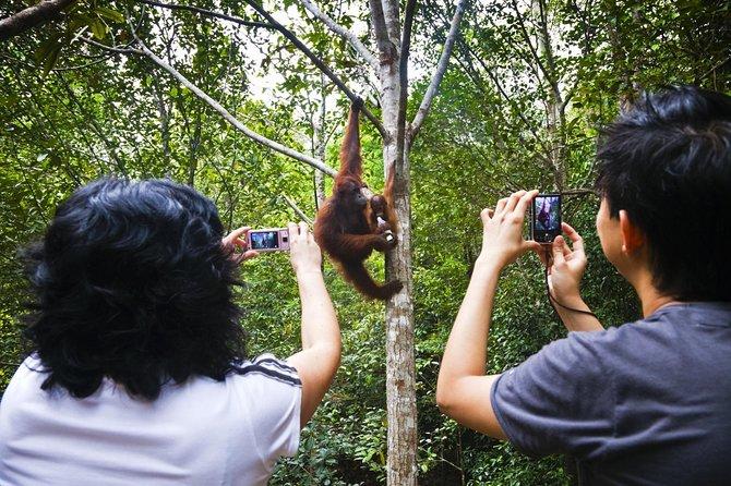 Sarawak Orangutan Semenggoh Wildlife Centre Tour