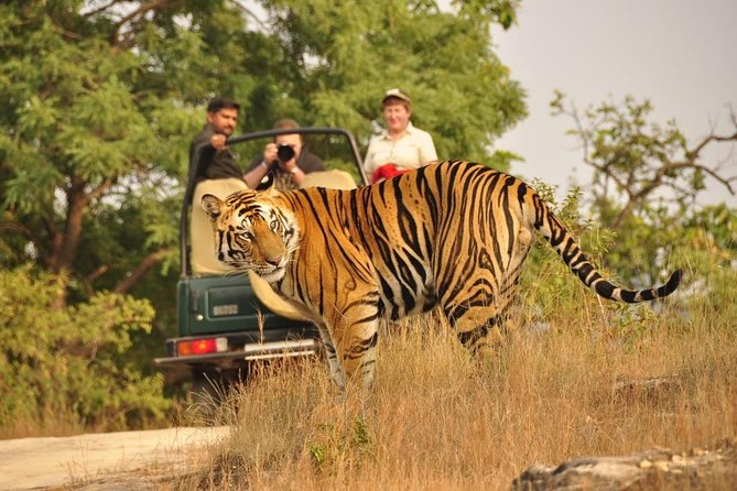 From Jaipur: Ranthambore Tiger Safari Private Day Trip/Tour