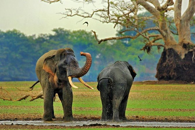 Private day tour: Yala National Park Safari
