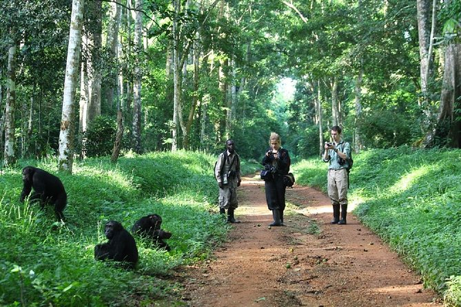 3 Day Chimp Trekking Kibale Forest National Park