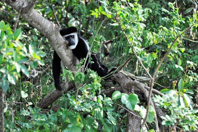 6 Days Gorillas and Wildlife Safari