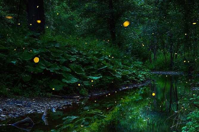 Fireflies Night Tour with Seafood Dinner from Kuala Lumpur