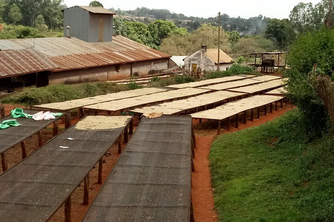 Experiential Coffee Farm Tour with Free Gift