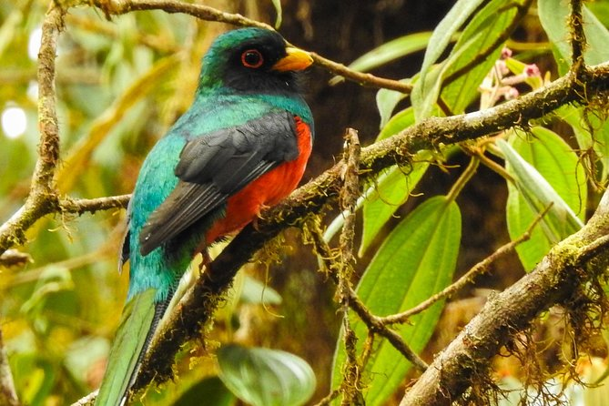 Mindo cloud-forest Private day tour; Waterfall and Birdwatching