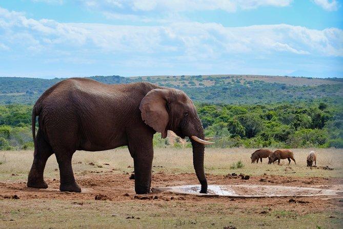 4 Day Bush Safari