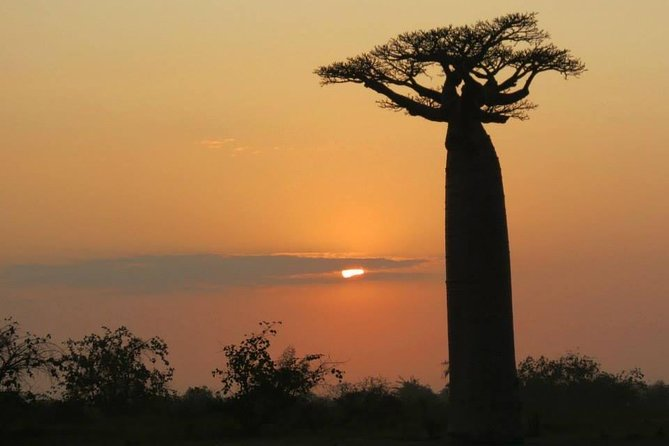 Baobab on route with sunset .