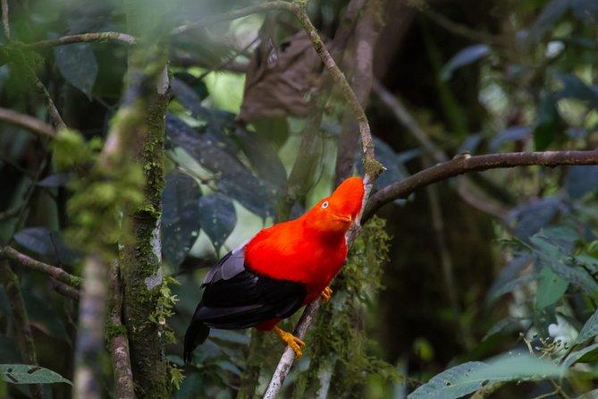 4day Manu Jungle Expedition Tour