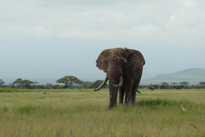 Amboseli 2 Nights