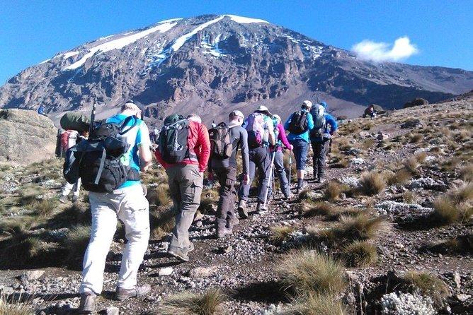 8 Days Lemosho Route Kilimanjaro Trekking