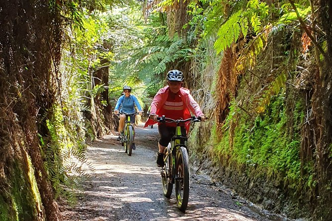 Shore Excursion in Tauranga with DayTrippers Cycle Tours