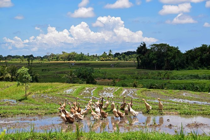 1 DAY Ubud Walk & Tegalalang Rice Terrace / Private Tour 8 Hours Ubud Market, Royal Palace, Museum etc. Enjoy Ubud to captivate visitors / English / Japanese driver included