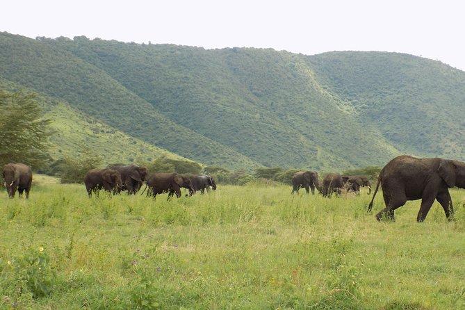 6 Days Tanzania Wildlife Safari Tour