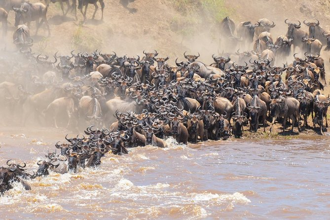 5 Days Wildebeest Mara River Crossing