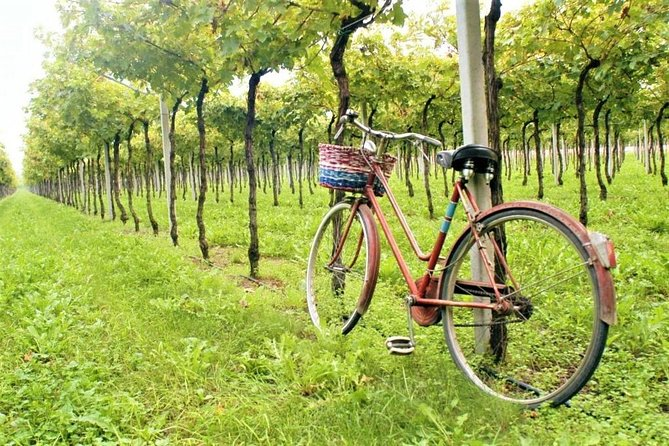 Bicycle tour to the Valpolicella, land of Amarone