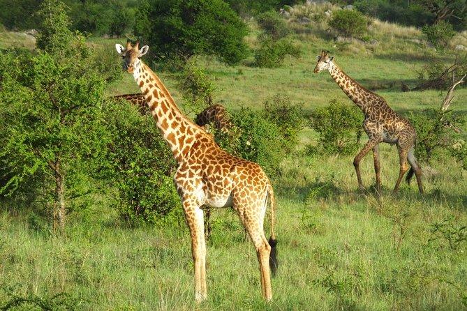4 Days Lake Manyara,Serengeti and Ngorongoro Safari