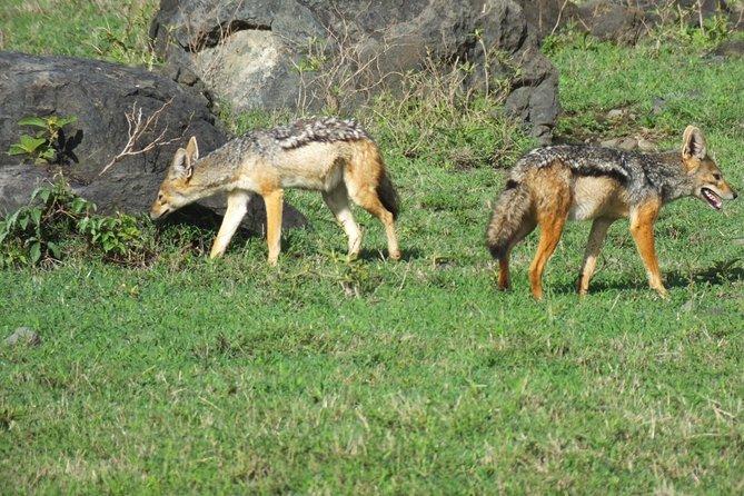 5 Days Lake Manyara, Serengeti and Ngorongoro Safari