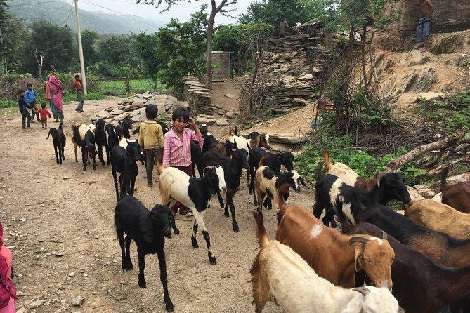 Village Tour by Tuk Tuk