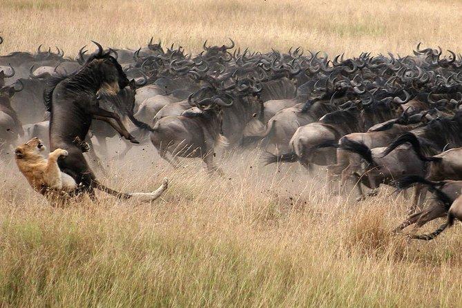 5 Days Lodge Safari - Lake Manyara, Serengeti, Ngorongoro, Tarangire.