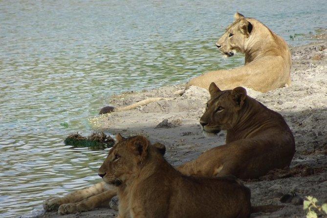 5 days Budget Big 5 Tanzania Safaris
