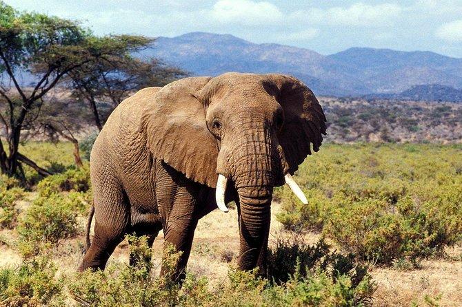 3 Days 2 Nights Samburu National Reserve