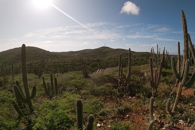 Eco-friendly private hike to the highest point of Aruba photo 6