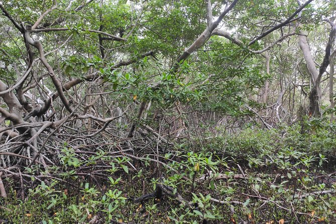 Eco-friendly private mangrove hike by Spanish Lagoon photo 6