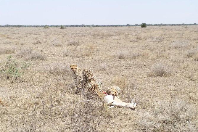 9 days the best of Tanzania Camping Safari