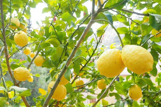 Amalfi Lemon Experience - From Naples