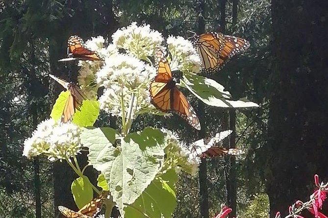 Mariposas Monarca en bicicleta y arqueología mexicana with NOMAD