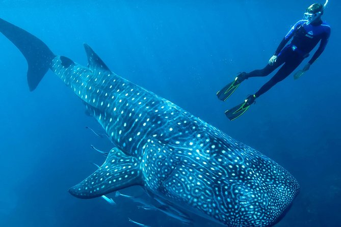 Whale Shark Adventure