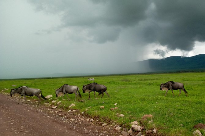 5 Days Safari from Dar es Salaam to Tarangire NP, Manyara NP & Ngorongoro Crater