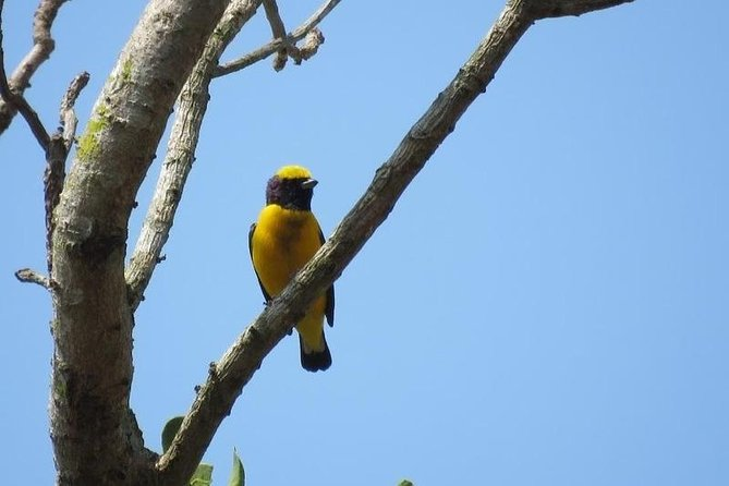 Bird Watching in Cartagena full day photo 3