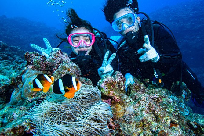 Great Value Set / Blue Cave Snorkel + Clownfish Experience Diving