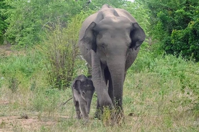 Safaris and National Parks by Lanka Trail
