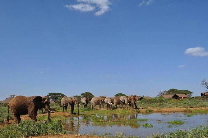 Majestic Elephant Safari