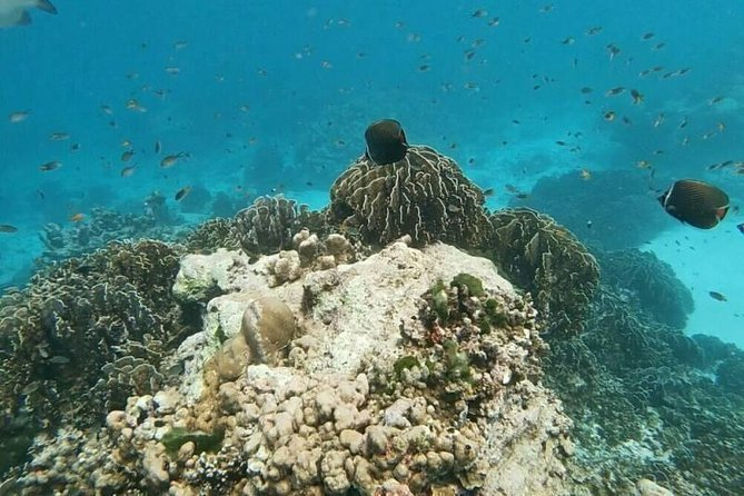 PHUKET: Join Tour Full Day in Paradise of Similan 1 Day Tour Phang-nga bay photo 2