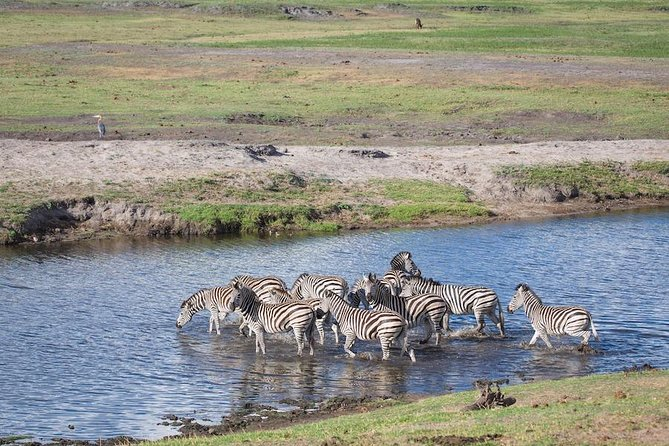 Chobe Safari Experience Day Trip from Livingstone photo 17