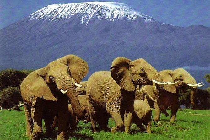 2 Days 1 Night Amboseli National Reserve